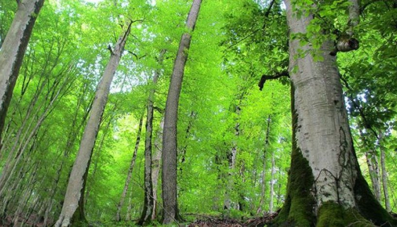 جشن ثبت جهانی جنگلهای هیرکانی برگزار میشود