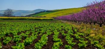 مازندران در محاصرۀ شکوفهها
