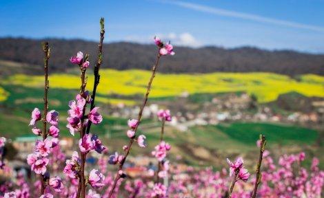 بهار در اجارستاق