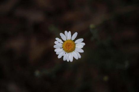 دلبرانههای کوچک طبیعت مازندران