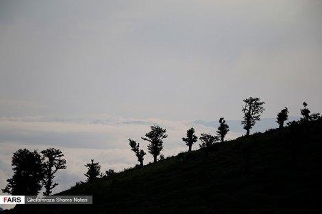 طبیعت  زیبای کوهستان چالوس