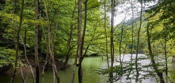 دریاچه چورت، طبیعت بکر مازندران