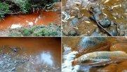 مرگ 24 هزار ماهی در اثر سهلانگاری کارخانه