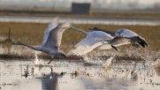 وبینار آموزشی با موضوع« پرندگان مهاجر در مازندران»