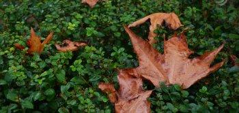 پاییز در ساری