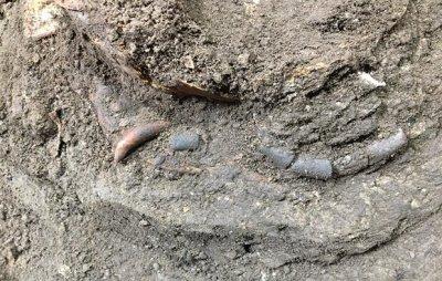 کشف اسکلت کودک دوران پارینه سنگی در هوتو بهشهر